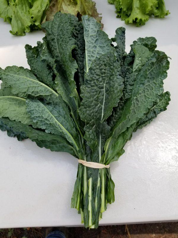 A Bundle of Lacinato Kale