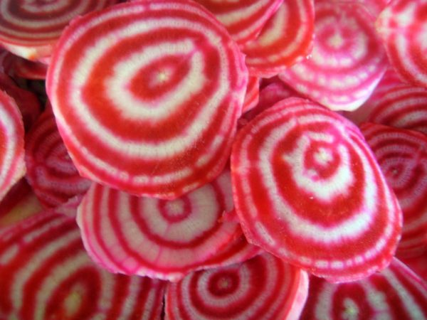Spiral Cross Section of a Chioggia Beet